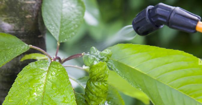 """""""Pestizideinsatz muss deutlich sinken"""""""